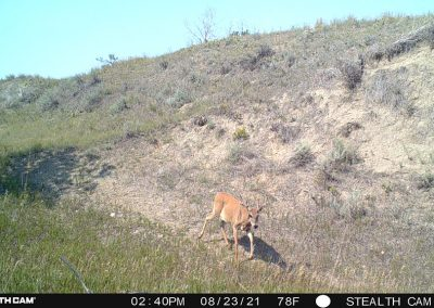 Crooked Creek Outfitters Whitetail Deer Hunts